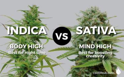 CBDLUK-Blog-Cannabis-Indica-vs-Sativa.jpg