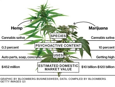 Hemp-vs-Marijuana.jpg